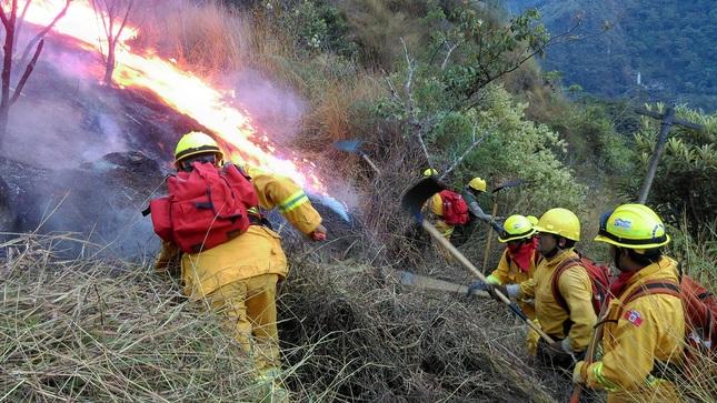 En 50% se reducen hectáreas afectadas por incendios forestales en Áreas Naturales Protegidas gracias a estrategias preventivas