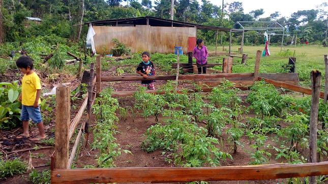 Promueven conservación del Santuario Nacional Megantoni con actividades educativas en idioma machiguenga
